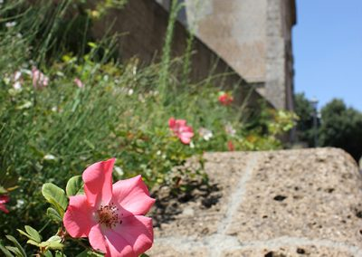 Orvieto-Italy-flower